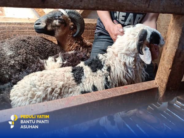 kambing qurban untuk Yatim